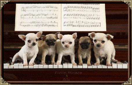 Анимация Щенки играют на пианино Собачий вальс