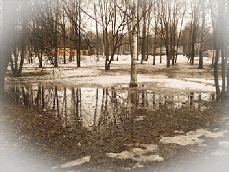Анимация Дождь капает на деревья и тающий снег