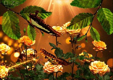 Анимация Бабочки на розе и на ветке дерева
