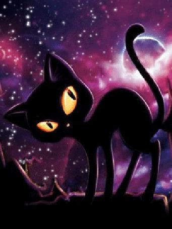 Анимация Желтоглазый моргающий кот