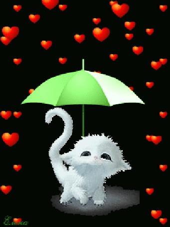 Анимация Милый белый котенок под зонтом от дождя из сердечек на черном фоне, автор Елена