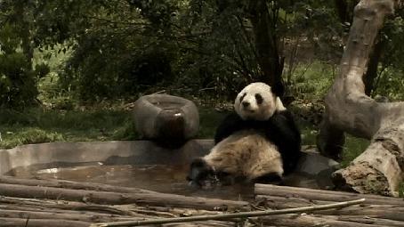 Анимация Панда блаженствует, лежа в бассейне
