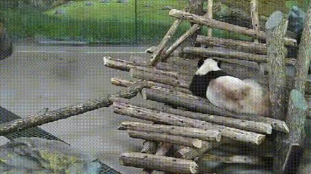 Анимация Белка играет с пандой в пятнашки