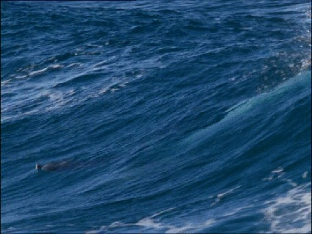 Анимация Прыгающие дельфины из воды