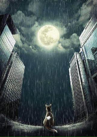 Анимация Кошка сидит под дождем на дороге и смотрит на полную луну