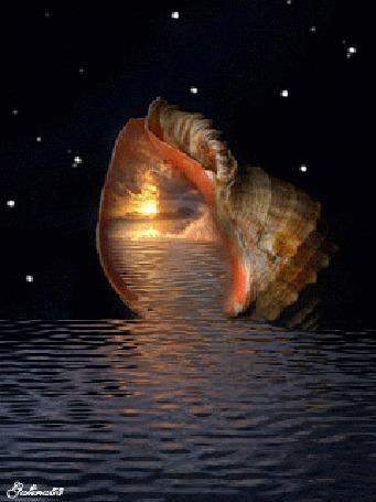 Анимация Большой морской рапан на воде, в котором отражаются море, небо, солнечный закат, на фоне ночного неба и сверкающих звезд