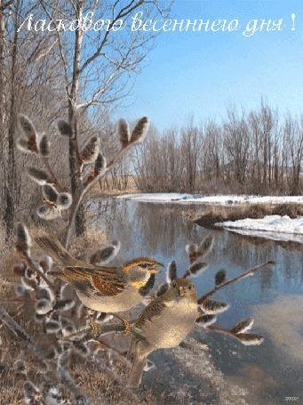 Анимация Две птички сидят на ветках вербы на фоне весенней природы, леса, тающего снега у реки, падающих на них солнечных лучей, (Ласкового весеннего дня!)