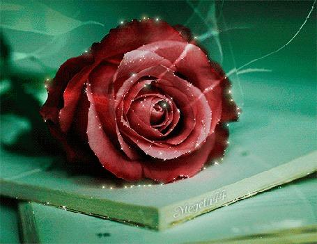 Анимация Бордовая роза лежит на столе