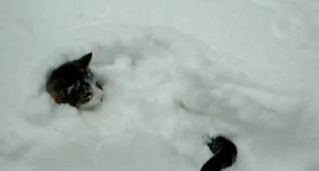 Анимация Кот выглядывает из сугроба, виляет хвостом и смотрит на него