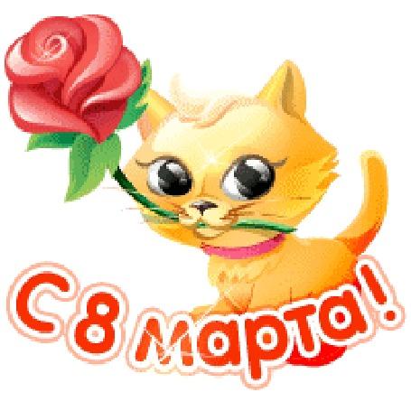 Анимация Рыжий котенок с розой (С 8 марта!)
