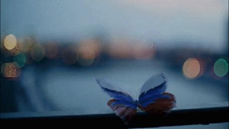Анимация Бабочка с окрасом как флаг России сидит на окне
