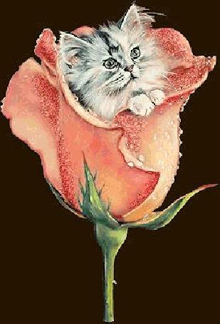 Анимация Пушистый котенок выглядывает из бутона розы