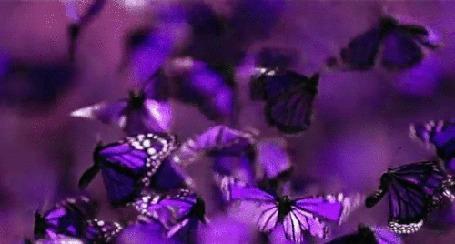 Анимация Стайка лиловых бабочек