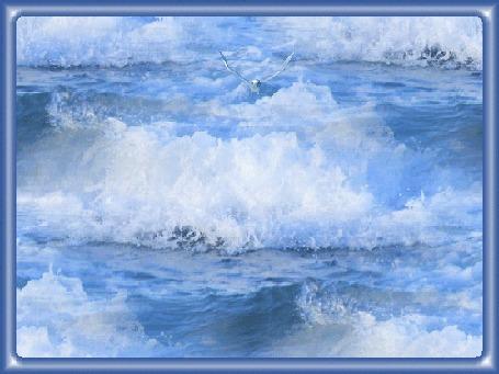 Анимация Летящая птица на фоне морских волн
