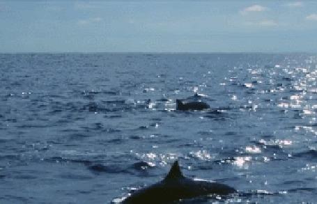 Анимация Дельфин выпрыгивает из воды