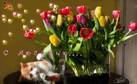 Анимация Просто огромный букет сочных тюльпанов на столе, рядом разлегся озорной котик, сыпятся сердечки (С Любовью)