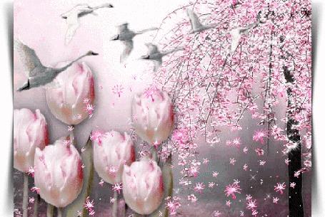 Анимация С весеннего дерева слетают лепестки прямо на розовые тюльпаны, мимо пролетают белые лебеди
