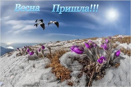 Анимация Крокусы пробились из-под талого снега на поляне, над которой летят утки и ярко светит солнце в голубом небе с облаками (Весна Пришла!)