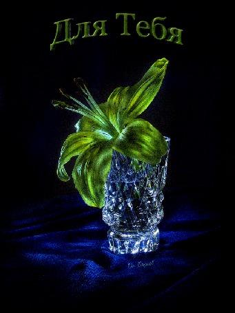 Анимация Светящийся цветок лилии в вазе, стоящей на синей ткани, в темноте (Для Тебя)