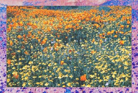 Анимация Картина с полевыми цветами