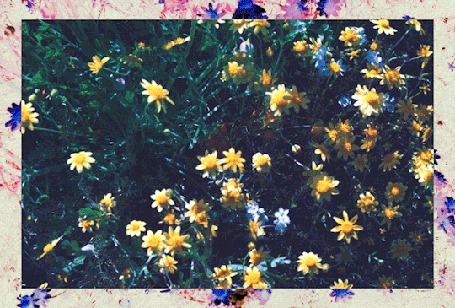 Анимация Картина с желтыми полевыми цветами