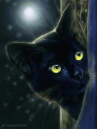 Анимация Черный кот со светящимися зелеными глазами лунной ночью выглядывает из-за занавески