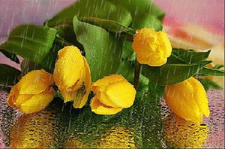 Анимация Желтые тюльпаны под дождем