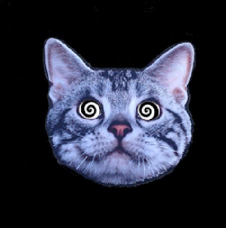 Анимация Психоделическое изображение кота с гипнотизирующим взглядом