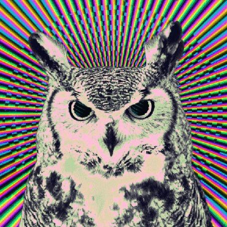 Анимация Черно-белая сова на фоне вращающихся по часовой стрелке цветных полос