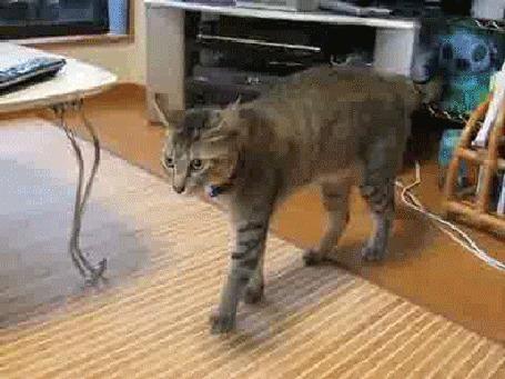 Анимация Кот испугался другого кота, наряженного в Хэллоуинский костюм