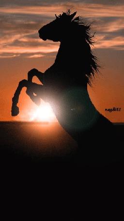 Анимация Силуэт ставшего на дыбы коня с развевающейся гривой в лучах заходящего солнца, by naghi63