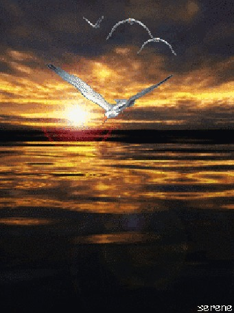 Анимация Чайки низко летают над морскими волнами в лучах заходящего солнца, by serene