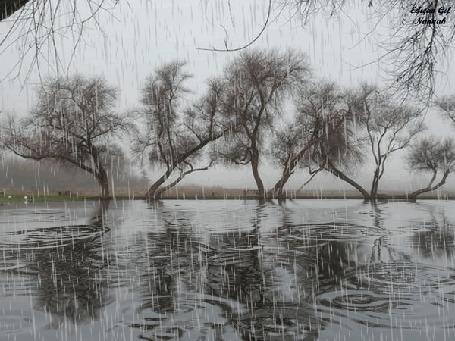 Анимация Деревья под дождем