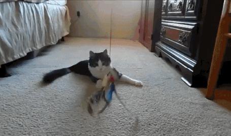 Анимация Кот гоняется за подвешенной игрушкой