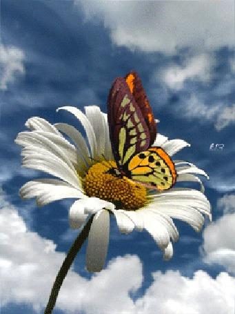 Анимация Яркая бабочка сидит на ромашке на фоне неба с облаками