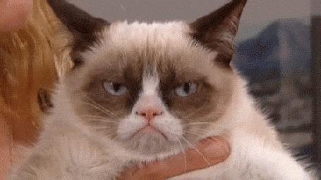 Анимация Grumpy Cat / Грустный кот на руках хозяйки