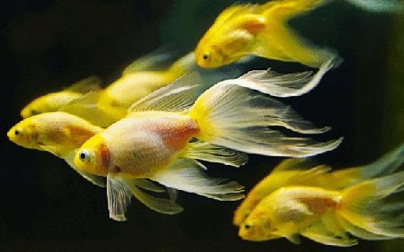Анимация Красивые рыбки в воде