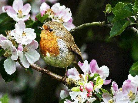 Анимация Птичка сидит на весенней цветущей ветке
