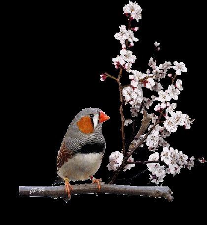 Анимация Птица сидит на весенней цветущей ветке