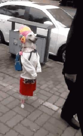 Анимация Собака, одетая в платьице и с ранцем за спиной идет на задних лапах по улице