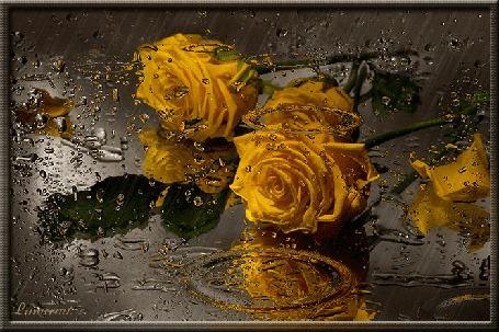 Анимация Желтые розы лежат на воде под дождем