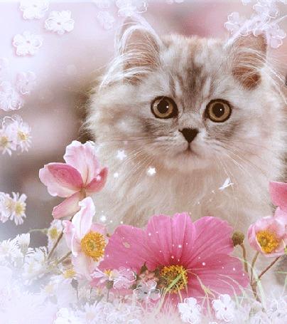 Анимация Моргающий кот в цветах