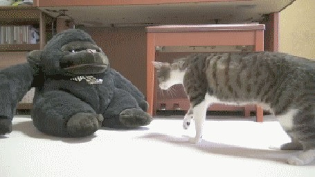 Анимация Кот осторожно обнюхивает большую игрушечную обезьяну, но не решается на нее напасть