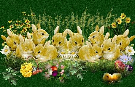 Анимация Кролики на полянке