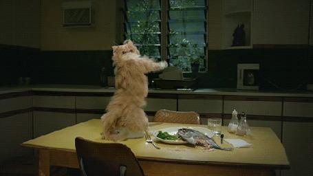 Анимация Кот танцует на стол