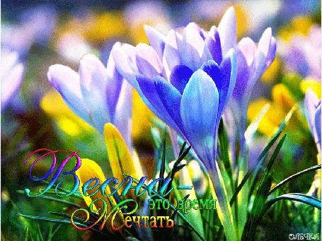 Анимация Весенние цветы крокусы, (Весна -это время мечтать), by Олечка