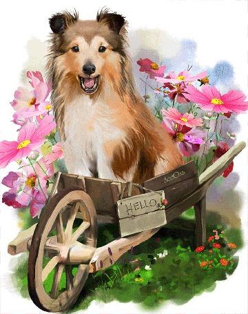 Анимация Собака сидит на тачке у цветов космеи, (hello / привет), by Ассоль