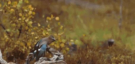 Анимация Пролетающая птица над гнездом
