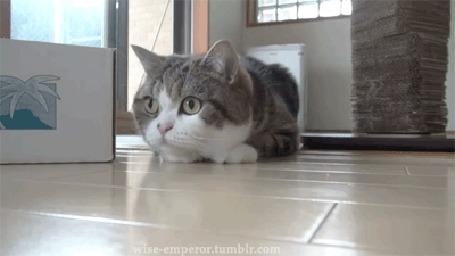 Анимация Кошка внимательно за чем - то следит