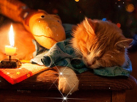 Анимация Спящий рыжий кот рядом с горящей свечой